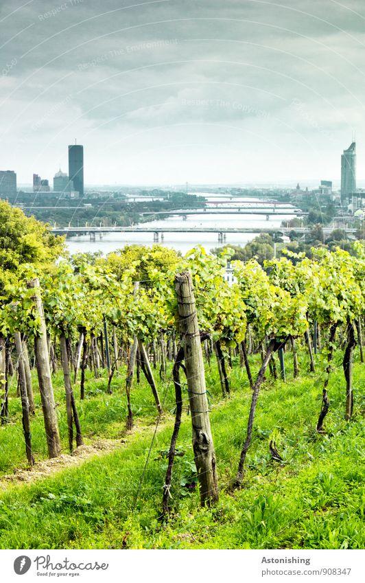 die Donau in Wien Himmel Natur blau Stadt Pflanze grün Baum Landschaft Wolken Haus dunkel Umwelt gelb Herbst hell Horizont
