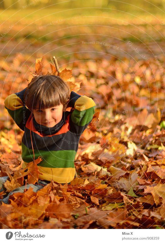 Wurf Mensch Kind Blatt Freude Wald Herbst Gefühle Junge Spielen Garten Stimmung Freizeit & Hobby sitzen Kindheit Fröhlichkeit Lächeln