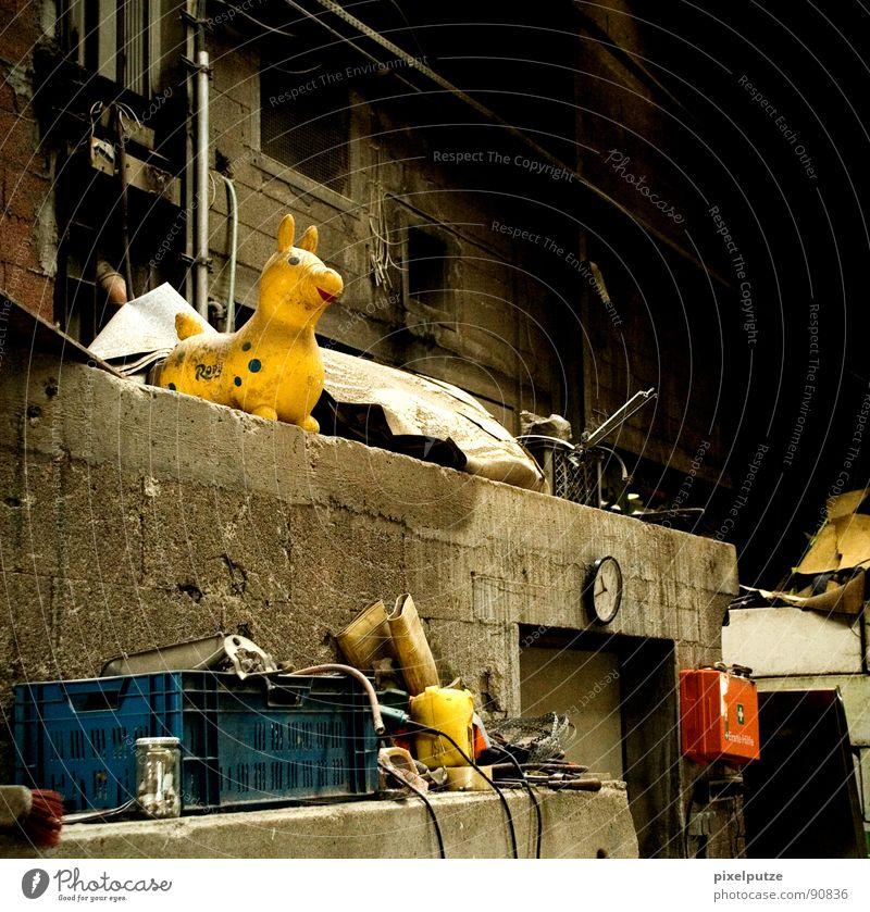der erweiterte zwinger alt Einsamkeit Tier Leben dunkel Wand Mauer Stimmung dreckig Pferd Industriefotografie Kitsch Dekoration & Verzierung Müll