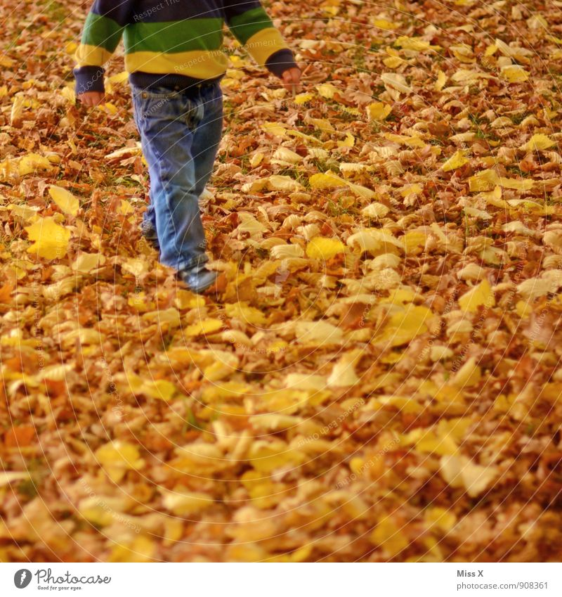 Laublauf Freizeit & Hobby Spielen Kinderspiel Mensch Kleinkind Beine 1 1-3 Jahre 3-8 Jahre Kindheit Natur Herbst Blatt Garten Park Wiese Wald gehen gelb