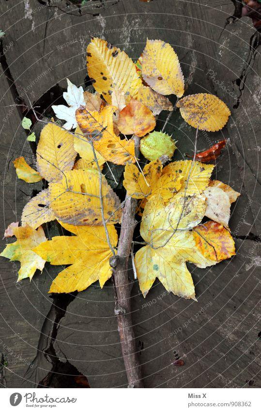 Laubbaum Freizeit & Hobby Spielen Kinderspiel Umwelt Natur Herbst Blatt Wald gelb Herbstlaub Herbstfärbung Basteln Ast Zweig Ahorn Buchenblatt Holz Baumstamm