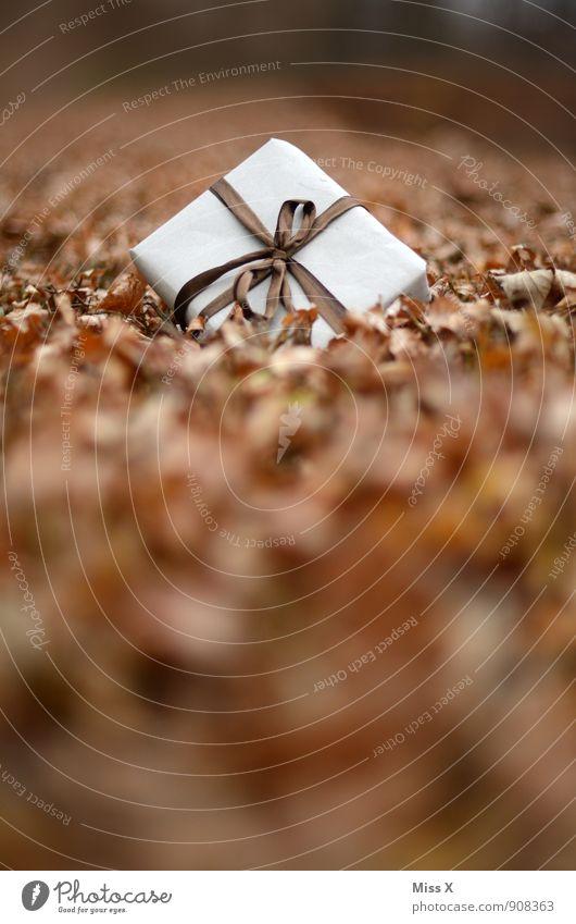 Geschenk im Laub Weihnachten & Advent Blatt Wald Herbst Wiese Feste & Feiern Stimmung liegen Geburtstag Herbstlaub Verpackung danke schön Post verloren Schleife