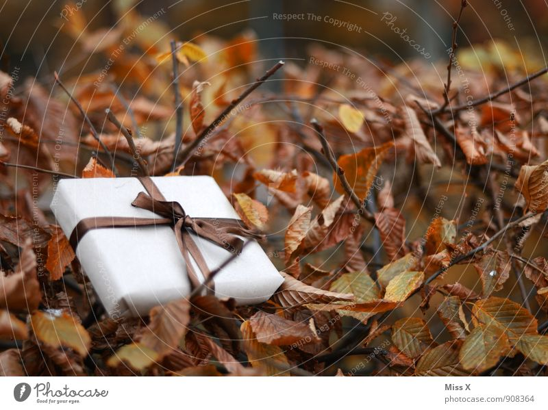Verloren Feste & Feiern Geburtstag Herbst Blatt Verpackung Paket Schleife liegen Geschenk Geschenkband verloren Post Versand geliefert Hecke Herbstlaub schenken