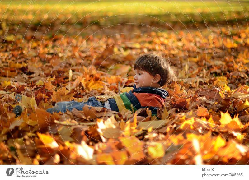 im Bett Mensch Kind Blatt Freude Wald Herbst Gefühle Junge Spielen Garten Stimmung liegen Zufriedenheit Kindheit Fröhlichkeit Lächeln