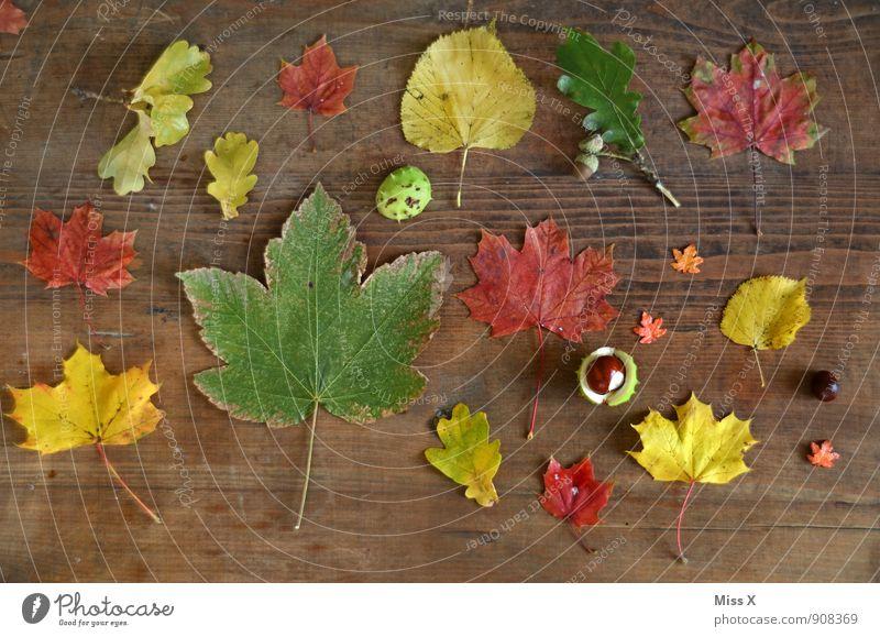 Sammlung Freizeit & Hobby Spielen Dekoration & Verzierung Natur Herbst Blatt Spielzeug Holz mehrfarbig Bastelmaterial Herbstlaub Anhäufung Kastanie Ahornblatt