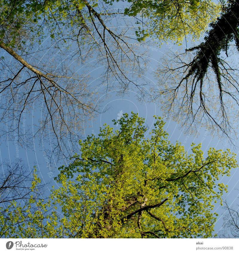 Himmel auf Erden 14 Natur Himmel Baum grün blau Pflanze Sommer ruhig Blatt Wolken Farbe Wald Leben oben Frühling Linie