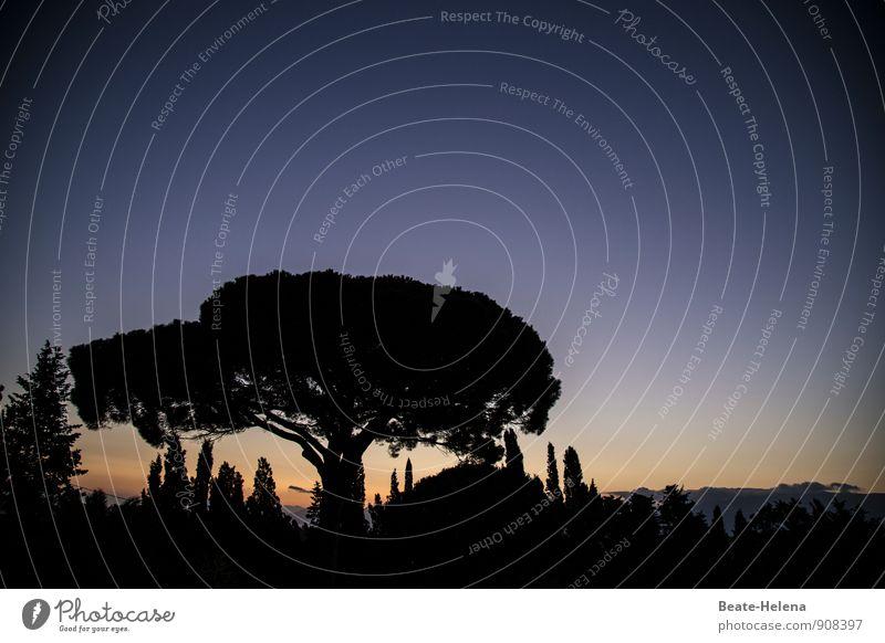 Abenddämmerung Ferien & Urlaub & Reisen Tourismus Natur Landschaft Pflanze Wolkenloser Himmel Sommer Schönes Wetter Baum Hügel beobachten schlafen warten