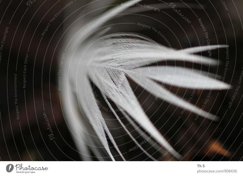 Feder Flügel Bewegung fliegen träumen ästhetisch authentisch einfach elegant frei Unendlichkeit schön nah wild weiß Gefühle Stimmung Gelassenheit Kitsch ruhig