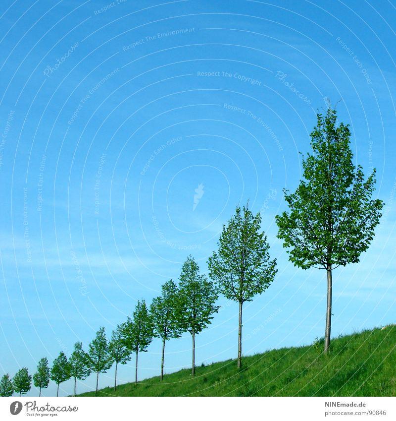 unendlich ... himmelblau Wolken Wiese grün Baum Blatt Baumstamm Baumreihe aufgereiht Allee klein groß Sommer Frühling Quadrat 12 Horizont Himmel schleierwolke