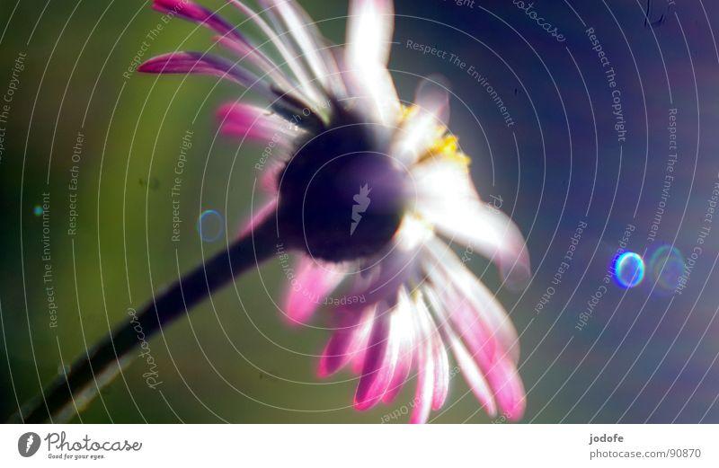 ~peaceful~ Sonne Blume grün blau Pflanze Sommer ruhig gelb dunkel Wiese springen Blüte Gras Frühling Garten Wärme