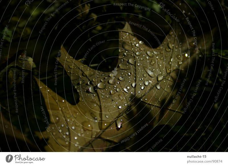 mir ist kalt Blatt Nacht Nachtaufnahme Makroaufnahme Nahaufnahme Herbst Wetter Wassertropfen Strukturen & Formen