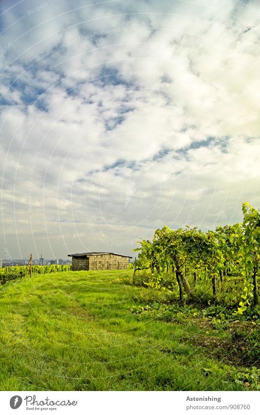 Hütte Umwelt Natur Landschaft Pflanze Himmel Wolken Horizont Herbst Wetter Schönes Wetter Gras Sträucher Nutzpflanze Wiese Hügel Gebäude hell blau grün weiß