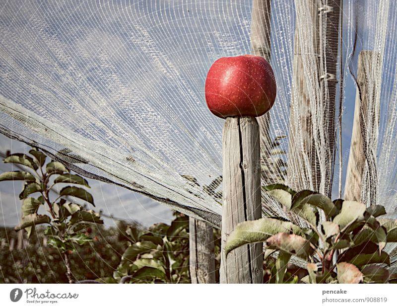 der apfelkönig Himmel Natur Baum rot Landschaft Herbst Business Schönes Wetter Urelemente einzigartig Netz Apfel Reichtum wählen König Nutzpflanze