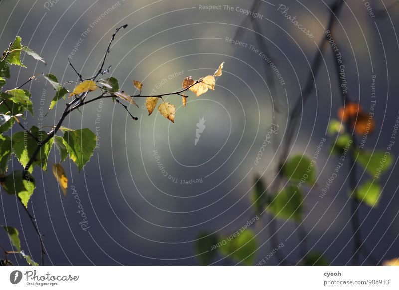 es herbstet Natur Herbst Pflanze Baum Blatt Park Wald Seeufer berühren fallen glänzend leuchten dehydrieren alt trocken blau braun grün Partnerschaft Ende