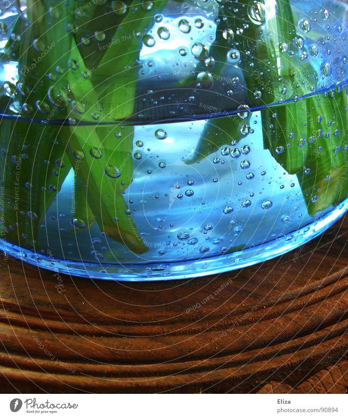 Luftbläschen Pflanze blau grün Wasser Blume Holz außergewöhnlich braun frisch Dekoration & Verzierung Glas rund Stengel Flüssigkeit Erfrischung atmen
