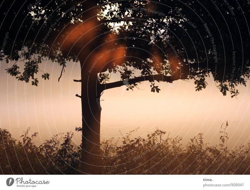 Frühlicht Natur Baum Landschaft Blatt ruhig Wald Umwelt Wärme Leben Herbst Gras Wege & Pfade natürlich Glück träumen Zufriedenheit