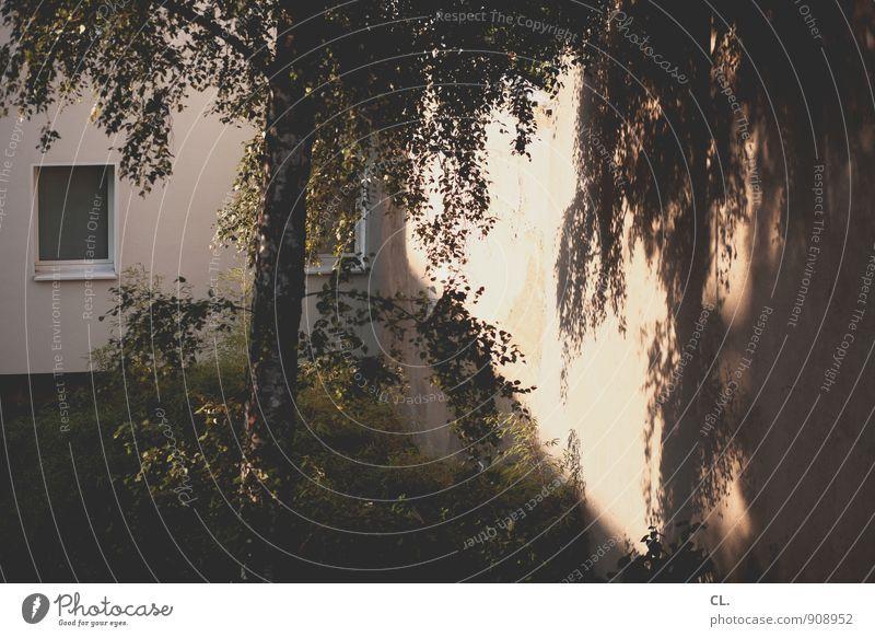 hinterhof Natur Baum ruhig Haus Umwelt Fenster Wand Mauer Garten Wohnung Wetter Häusliches Leben Sträucher Schönes Wetter Hinterhof