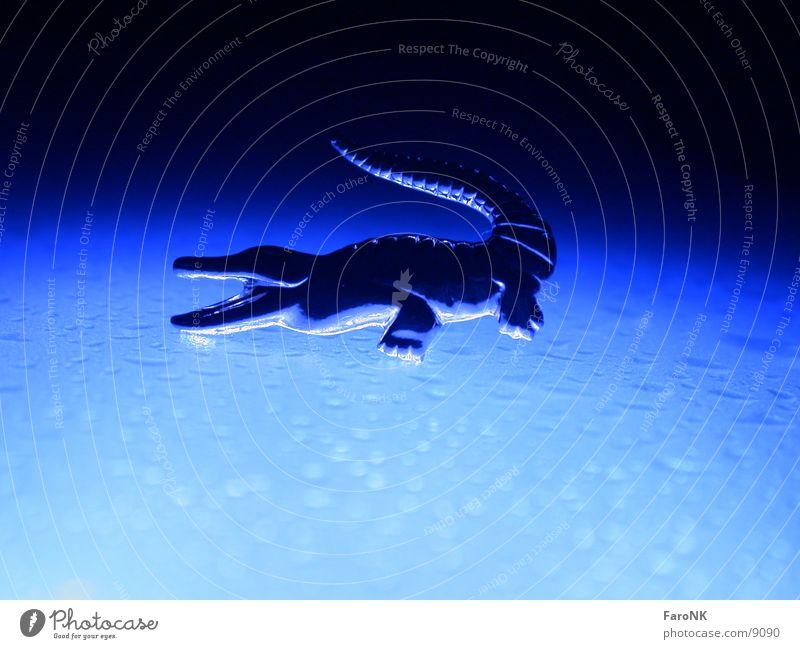 Krokodil Tier Makroaufnahme Nahaufnahme blau Wassertropfen