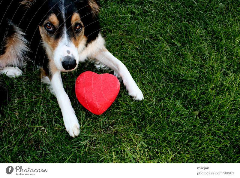 Einfach lieben Hund weiß grün rot Sommer Tier schwarz Auge Liebe Leben Wiese Gefühle Gras Haare & Frisuren Stein braun