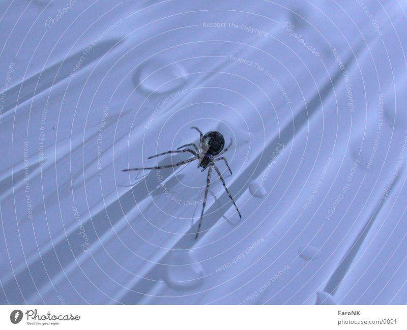 Spinne Tier Wassertropfen Verkehr Insekt
