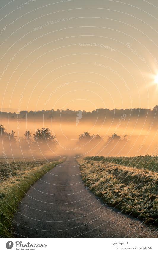 Morgenstund' und Gold und so Natur Landschaft Pflanze Urelemente Luft Wolkenloser Himmel Horizont Sonnenaufgang Sonnenuntergang Sonnenlicht Herbst Winter
