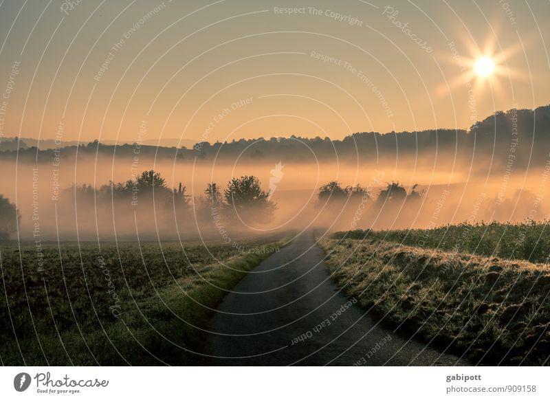 Frühnebel Leben harmonisch Wohlgefühl Zufriedenheit Sinnesorgane Erholung ruhig Meditation Umwelt Natur Landschaft Erde Wolkenloser Himmel Sonne Sonnenaufgang