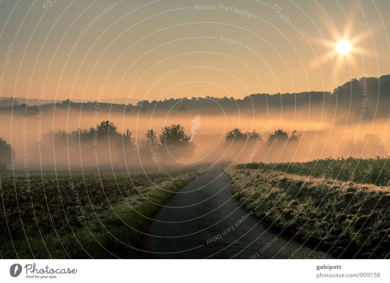 Frühnebel Natur Sonne Erholung Landschaft ruhig Umwelt Leben Herbst Wiese Wege & Pfade Wetter orange Feld Erde Idylle Nebel
