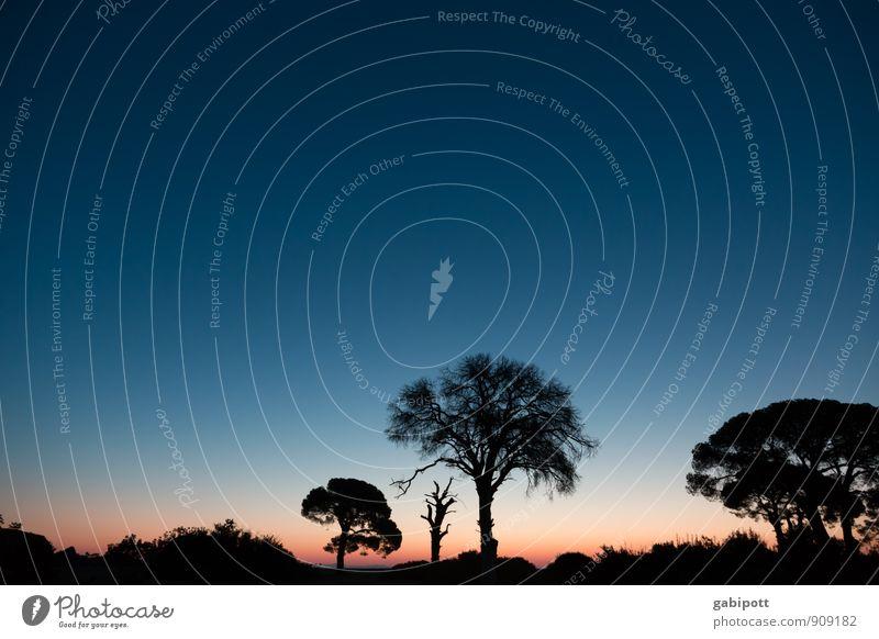 Schirmpinien am Morgen Himmel Natur Ferien & Urlaub & Reisen Pflanze Farbe Sommer Sonne Baum Erholung Meer Landschaft ruhig Strand Ferne Küste Freiheit