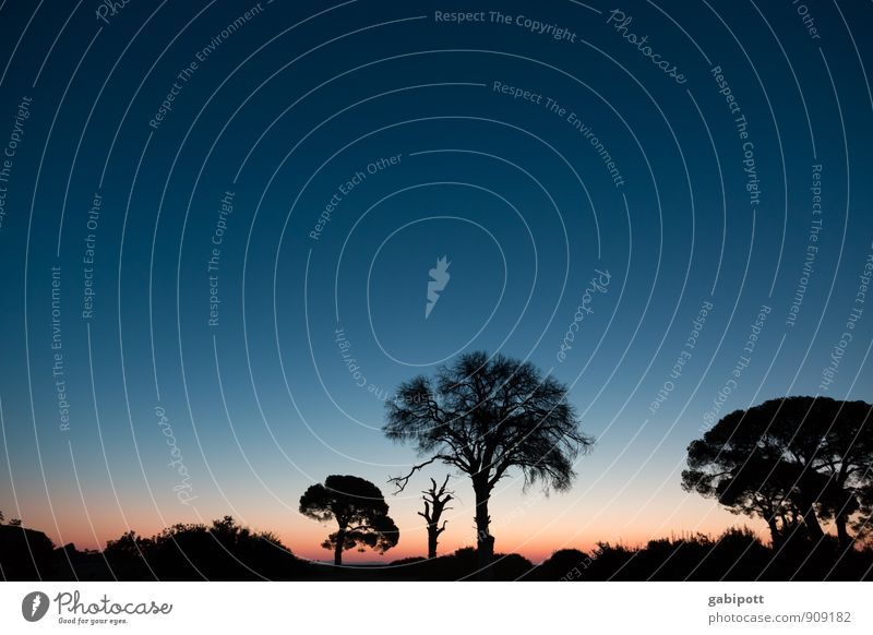 Schirmpinien am Morgen Wohlgefühl Erholung ruhig Meditation Duft Ferien & Urlaub & Reisen Ausflug Abenteuer Ferne Freiheit Natur Landschaft Himmel