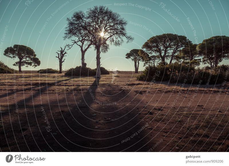 Cirali beach Natur Ferien & Urlaub & Reisen Pflanze Sommer Sonne Baum Erholung Landschaft ruhig Strand Ferne Freiheit Zufriedenheit wild Erde Tourismus