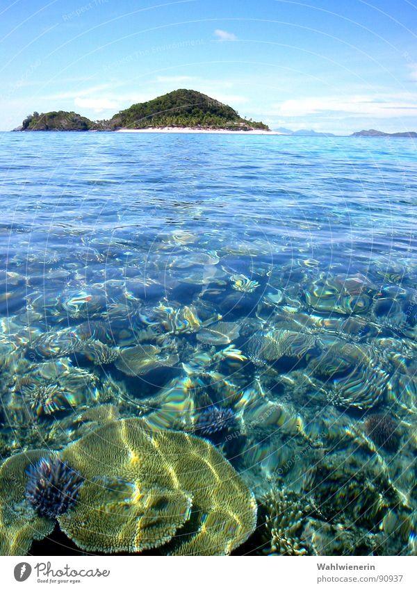 Waterworld Meer Ferien & Urlaub & Reisen Korallen Fidschiinseln tauchen Insel Wasser Matamanoa Island Unterwasseraufnahme
