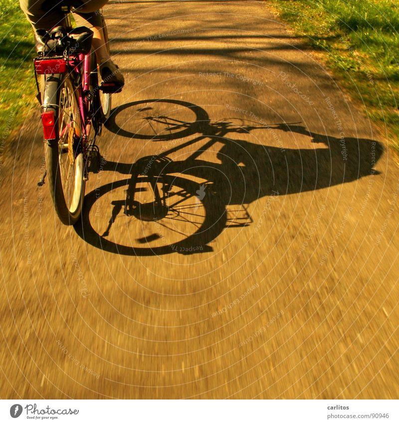 Sonntagsausflug 4 Fahrrad Ausflug Sommer Fahrradweg Fahrradtour Freizeit & Hobby Gesundheit Schatten Anschnitt Bildausschnitt Detailaufnahme Rückansicht