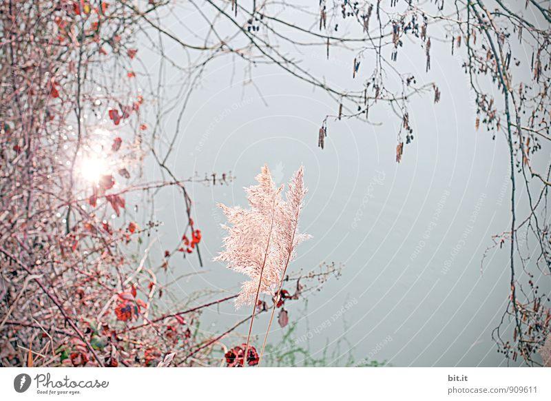 durch die rosarote Brille... Natur Ferien & Urlaub & Reisen Pflanze Wasser Sommer Erholung Blume ruhig Blüte Frühling Glück Feste & Feiern Stimmung träumen