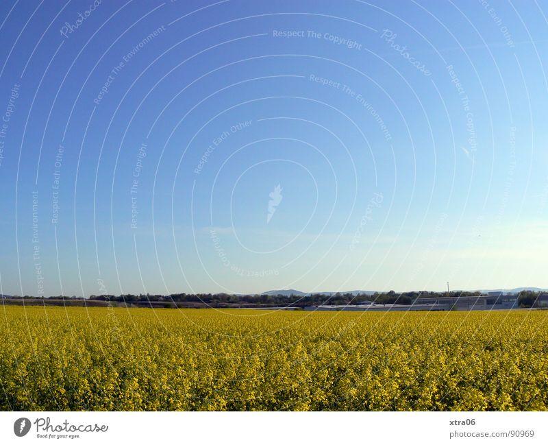 ein rapsfeld ist ein rapsfeld ist ein rapsfeld Himmel blau Pflanze Sommer gelb Ferne Blüte Frühling Wärme Landschaft Feld Umwelt groß Horizont Energiewirtschaft Physik