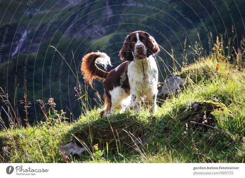 highlands Hund Natur Ferien & Urlaub & Reisen grün Sommer Landschaft Tier Umwelt Berge u. Gebirge natürlich braun Lifestyle Tourismus stehen warten wandern