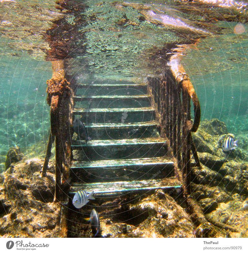 Aus dem Meer Unterwasseraufnahme Wasser Meer Sommer ruhig Fisch Treppe Konzentration aufsteigen Riff Korallen Tier Jahreszeiten bewachsen Wasseroberfläche Korallenriff