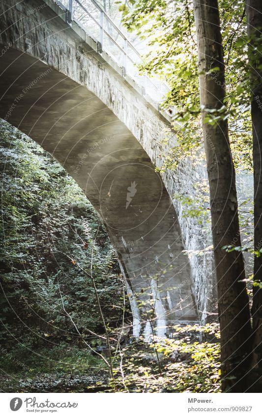 under the brige Umwelt Sonnenlicht Herbst Pflanze Baum Wald hell Brücke Sonnenstrahlen Blatt Lichterscheinung alt Eisenbahnbrücke Farbfoto Außenaufnahme Tag