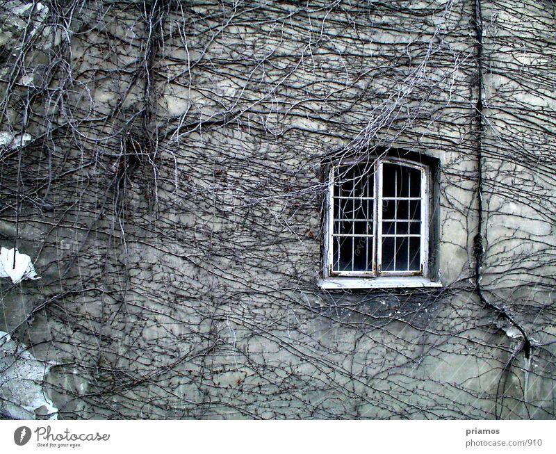 Rapunzel laß dein haar herunter alt Fenster Mauer Architektur Fassade Verfall