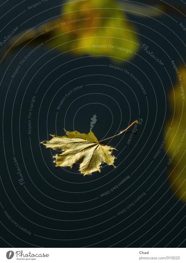 Sommer Abschied harmonisch Erholung ruhig Meditation Trauerfeier Beerdigung Umwelt Natur Landschaft Pflanze Urelemente Wasser Herbst Schönes Wetter Baum Blatt