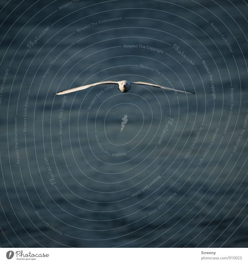 Achtung, Platz da! Ich komme! Natur blau Pflanze weiß Wasser Tier grau fliegen Vogel elegant ästhetisch Flügel Fluss Gelassenheit Möwe direkt