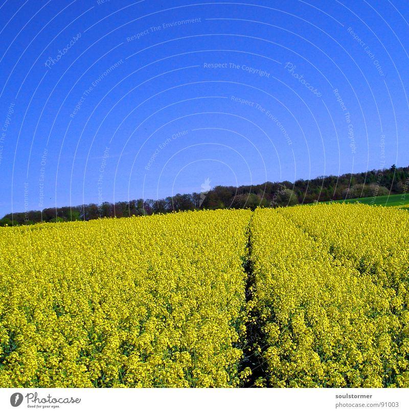 La Colza V Natur Himmel Blume grün blau Pflanze gelb Ferne Wald Wiese Blüte Frühling Feld Energiewirtschaft stoppen Spuren