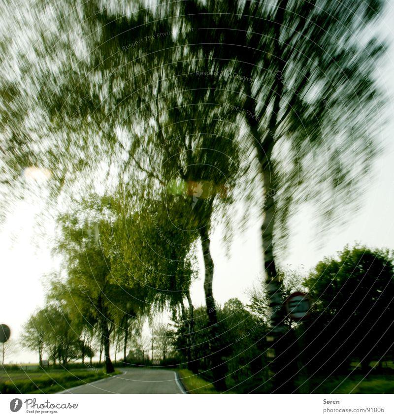 Landspeed Geschwindigkeit Zone 50 Autofahren Landstraße Baum Tunnelblick Asphalt Verkehr Verkehrsschild Frühling 50zone Wege & Pfade 100km/h Bremse Landschaft