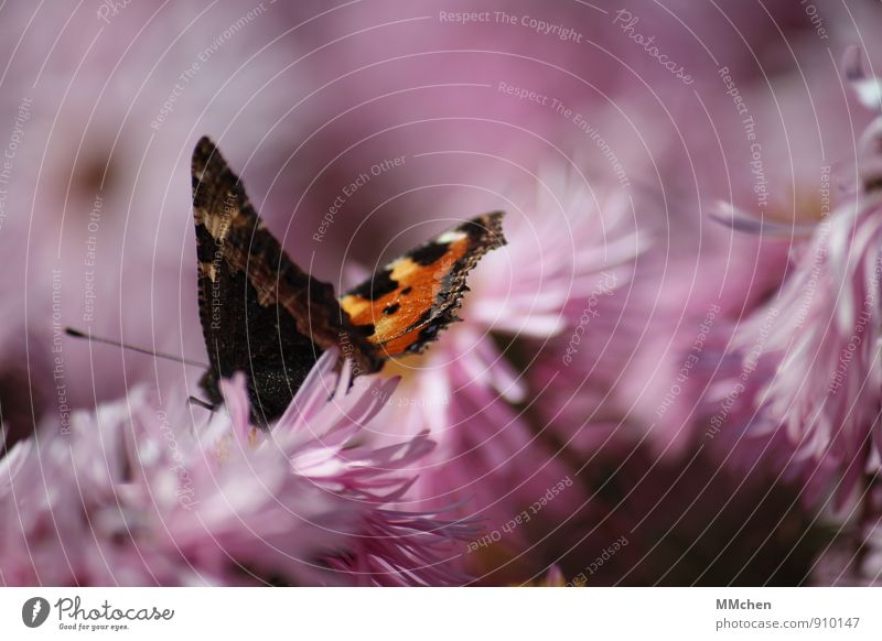 Can`t wait Natur Sommer Blume ruhig Tier Bewegung Herbst Blüte natürlich Essen Garten fliegen rosa Park Idylle genießen