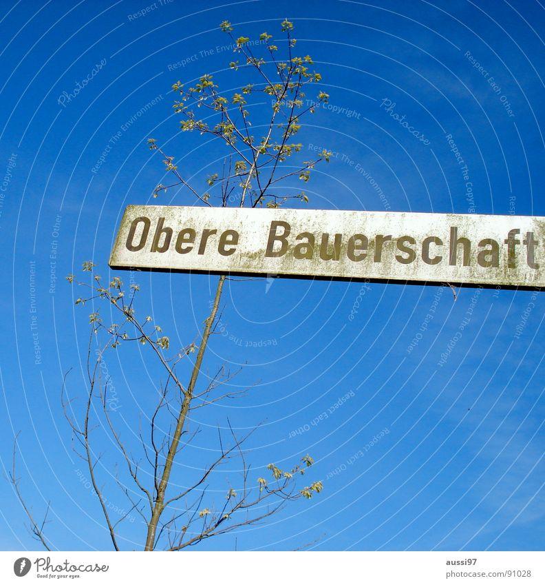 ...der die Kartoffeln ranschafft Himmel Baum blau Straße oben Feld Schilder & Markierungen Straßennamenschild