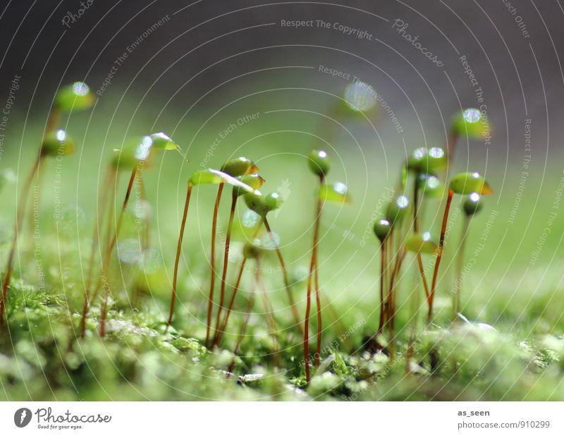 Im Moos was los Wellness Leben Gartenarbeit Umwelt Natur Pflanze Erde Frühling Klima Blatt Wiese Moor Sumpf Wachstum ästhetisch Fröhlichkeit natürlich positiv