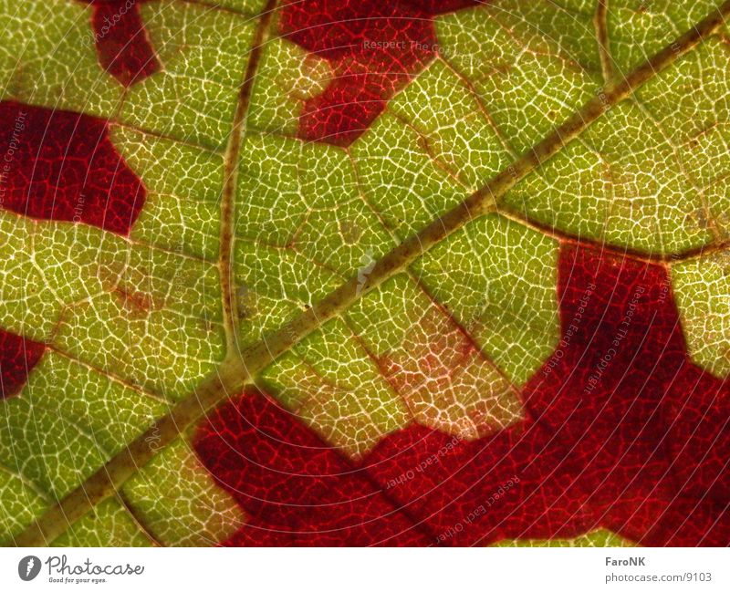 Blatt Herbst Farbe