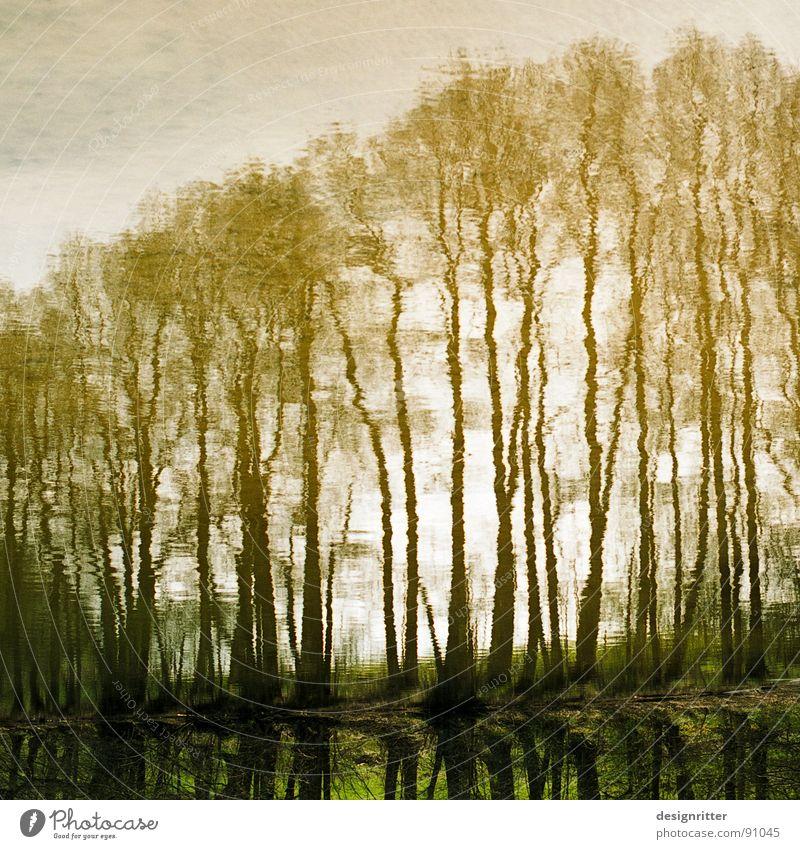 verschwommen Baum See Reflexion & Spiegelung Spiegelbild verschwimmen Wellen Oberfläche Image Wasser Bild Selbstportrait Unschärfe trees water lake mirror