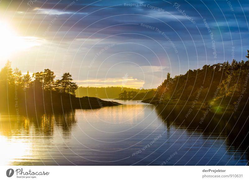 Schären genießen Natur Ferien & Urlaub & Reisen Pflanze Sommer Meer Landschaft Freude Ferne Wald Umwelt Gefühle Küste Glück Freiheit Stimmung Freizeit & Hobby