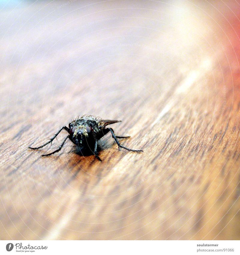 fly away! Fliege Insekt Holz Tisch braun Geschwindigkeit Tier Makroaufnahme Tiefenschärfe Unschärfe Quadrat Momentaufnahme Eintagsfliege Flügel Beine