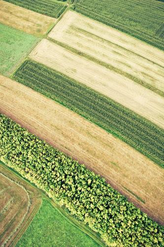 erdfarben Natur Pflanze Blume Landschaft Blatt Tier Umwelt Herbst Gras Blüte Feld Wachstum Erde Ernährung Blühend Landwirtschaft